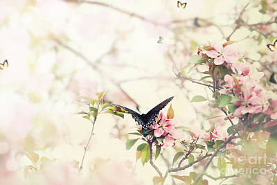Close Focus Nature Scene Photograph - Swallowtail In Spring by Stephanie Frey