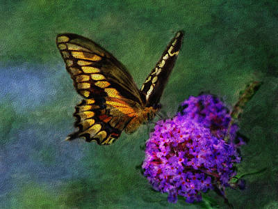 Blue Swallowtail Mixed Media - Swallowtail Landing by Renee Skiba