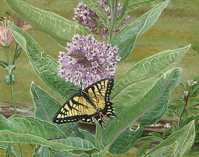Painting - Swallowtail On Milkweed by Lucinda V VanVleck