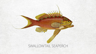 Saltwater Fishing Drawing - Swallowtail Seaperch by Aged Pixel