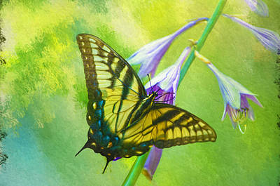 Photograph - Swallowtail Visits Hosta Flowers by Sandi OReilly