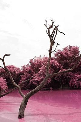 Magenta Photograph - Swamp 1 by Sumit Mehndiratta