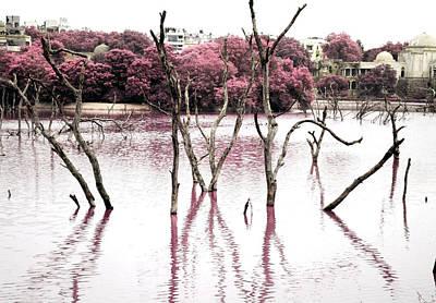 Photograph - Swamp 3 by Sumit Mehndiratta