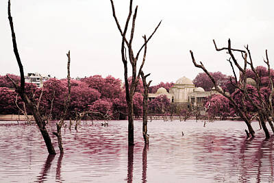 Photograph - Swamp And Tomb by Sumit Mehndiratta