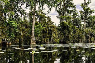 Swamp Beauty Art Print by Janet Fikar
