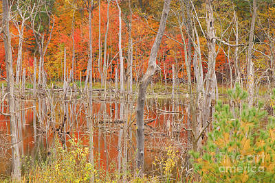 Swamp Colors Art Print by Mary Carol Story