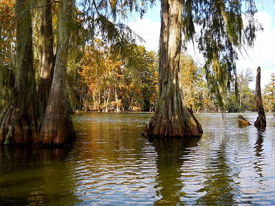 Swamp - Cypress Trees Art Print by Beth Vincent