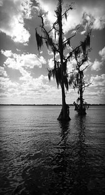 Photograph - Swamp Cypress Trees In Lake Eloise In Lakeland Florida by Kelly Hazel