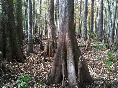 Photograph - Swamp Edge Landscape by D Wallace