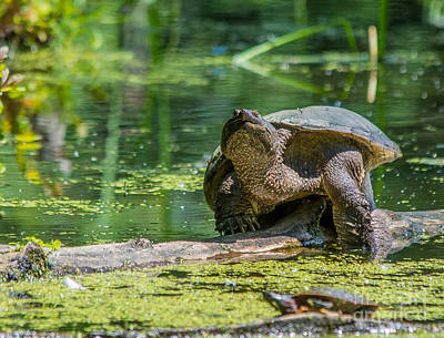Photograph - Swamp Greeting by Cheryl Baxter