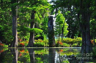 Swamp In Bloom Art Print