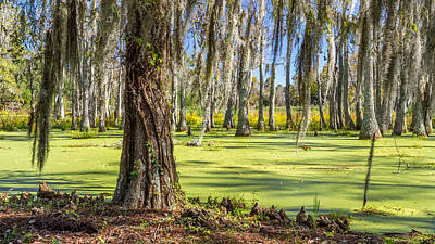 Photograph - Swamp In Magnolia Plantation And Gardens Charleston Sc by Pierre Leclerc Photography