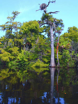 Hobe Photograph - Swamp Land by Carey Chen