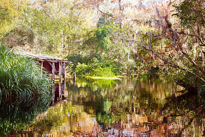 Photograph - Swamp Life by Judy Hall-Folde