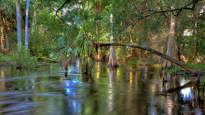Photograph - Swamp Life by Sean Allen