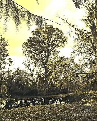 Photograph - Swamp by Lizi Beard-Ward