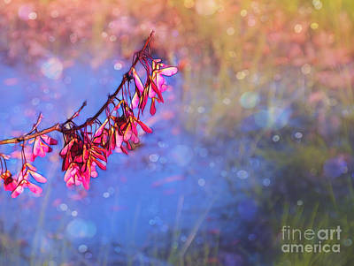 Photograph - Swamp Maple Bokeh by Judi Bagwell