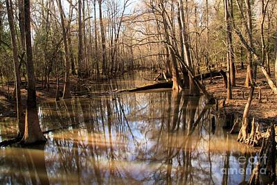 Photograph - Swamp Reflections by Adam Jewell