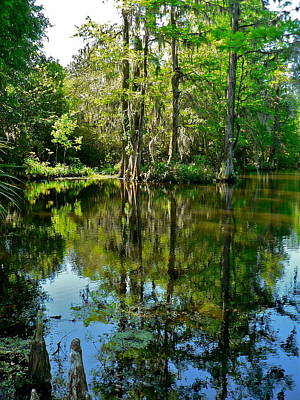 Photograph - Swamp Reflections by Jean Wright