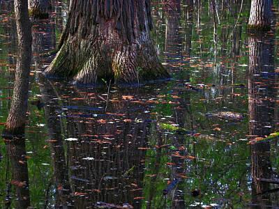 Swamp Art Print by Rowana Ray