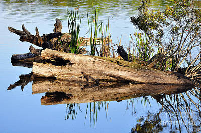 Moorhen Photograph - Swamp Scene by Al Powell Photography USA
