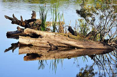Moorhen Photograph - Swamp Scene by Al Powell Photography USA