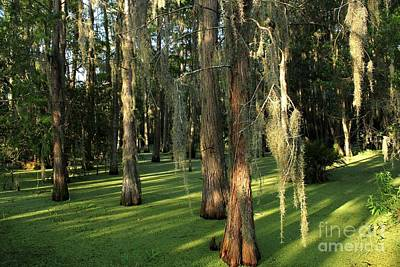 Photograph - Swamp Shadows by Theresa Willingham