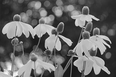 Photograph - Swamp Sunflowers - Black And White by Suzanne Gaff