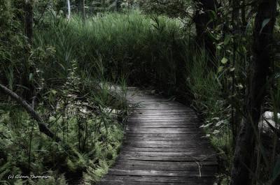 Swamp Walk Art Print by Glenn Thompson