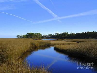 Photograph - Swamp Water Blue by Lew Davis
