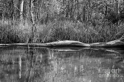 Photograph - Swamped Bw by Kathleen K Parker