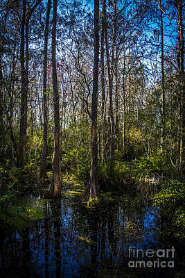 Alligator Photograph - Swampland by Marvin Spates