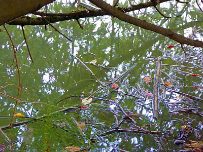 Photograph - Swampy Reflection by Laurie Tsemak