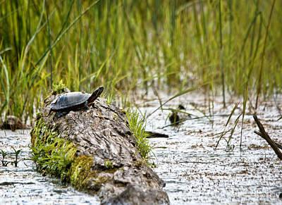 Photograph - Swampy Scene 2 by Cheryl Baxter