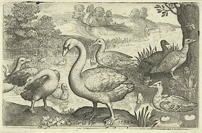 Swan And Geese And Ducks Near The Water, Print Maker Art Print