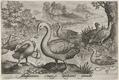 Swan And Geese And Ducks Near To Water, Nicolaes De Bruyn Art Print