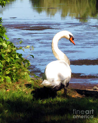 Photograph - Swan by Anne Ferguson