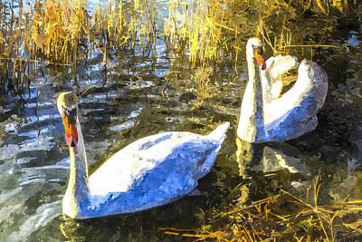 Swan Pair Photograph - Swan Art by David Pyatt