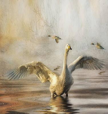 Art Print featuring the photograph Swan At Sundown by Brian Tarr