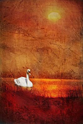 Photograph - Swan by Bob Coates