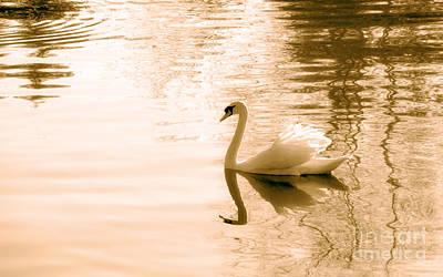 Swan Art Print by Charline Xia