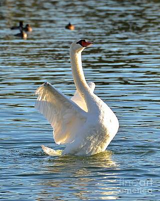 Photograph - Swan Dance by Carol  Bradley