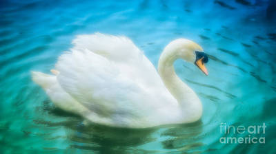 Photograph - Swan Dreams II by Julie Clements