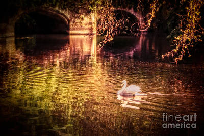 Photograph - Swan Dreams by Julie Clements