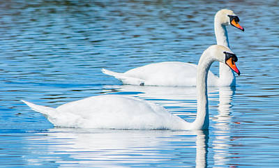 Photograph - Swan Dreams by Parker Cunningham