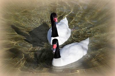 Swan Duo Art Print by Marty Koch