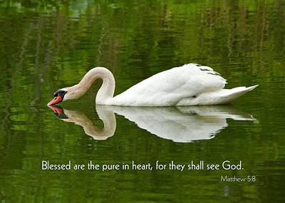 Photograph - Swan Heart Bible Verse Greeting Card Original Fine Art Photograph Print As A Gift by Jerry Cowart