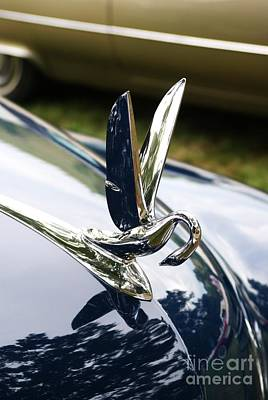 Photograph - Swan Hood Ornament by Neil Zimmerman