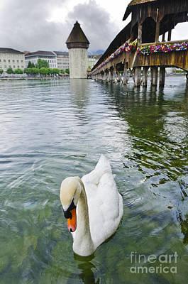 Lucerne Photograph - Swan In Front Of Chapel Bridge  Lucerne Switzerland by Oscar Gutierrez