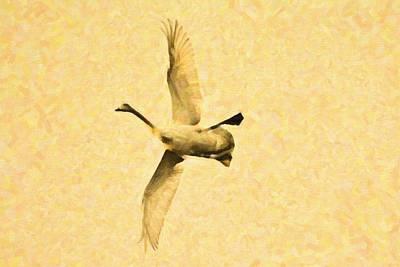 Swan In Oil Paint Original